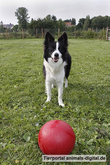 Ballspiele mit Hund - a-d2012_0509