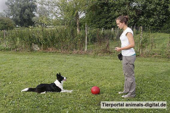 Ballspiele mit Hund - a-d2012_0510