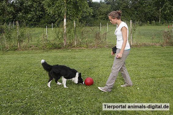 Ballspiele mit Hund - a-d2012_0511