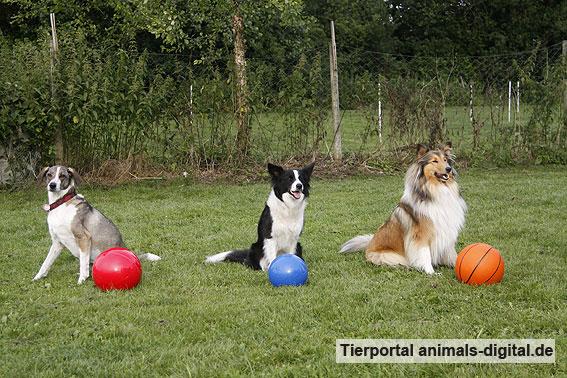 Ballspiele mit Hund - a-d2012_0517