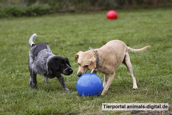 Ballspiele mit Hund - a-d2012_0522