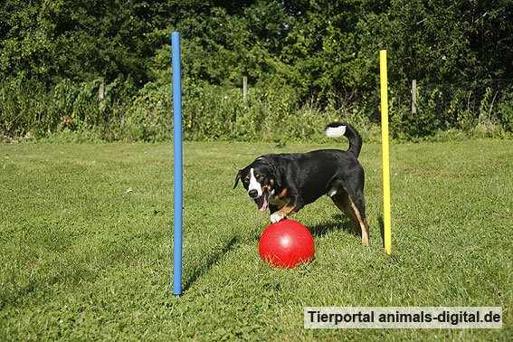 Ballspiele mit Hund - a-d2012_0524