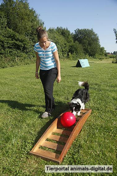 Ballspiele mit Hund - a-d2012_0528