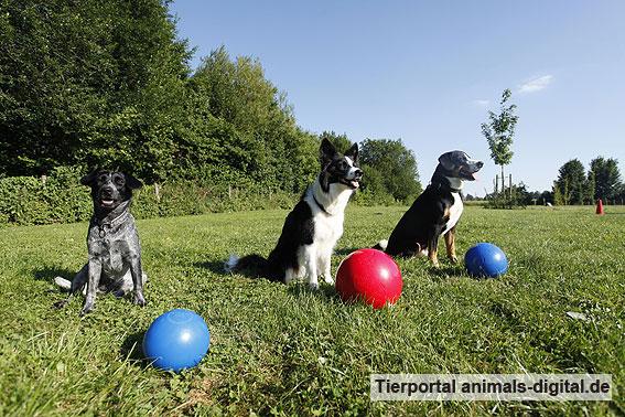 Ballspiele mit Hund - a-d2012_0536