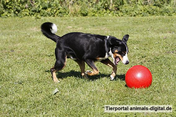 Ballspiele mit Hund - a-d2012_0543