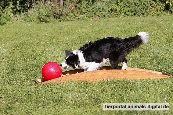 Ballspiele mit Hund - a-d2012_0545