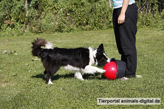 Ballspiele mit Hund - a-d2012_0546
