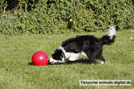 Ballspiele mit Hund - a-d2012_0547