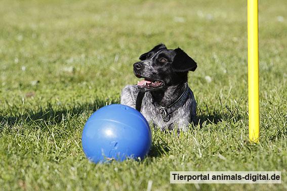 Ballspiele mit Hund - a-d2012_0551