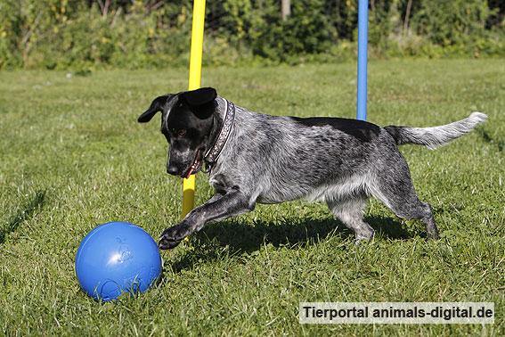 Ballspiele mit Hund - a-d2012_0552