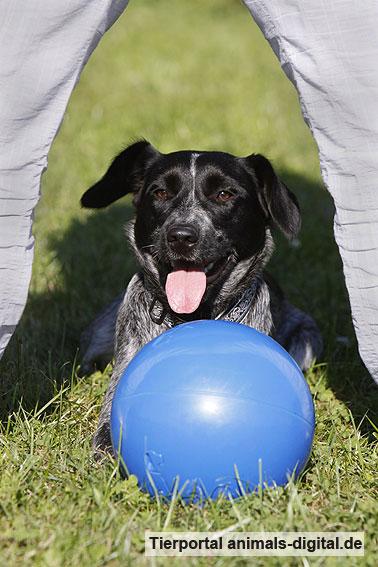Ballspiele mit Hund - a-d2012_0554