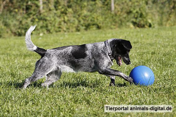 Ballspiele mit Hund - a-d2012_0556